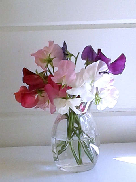 Bunch of sweetpeas in a glass vase